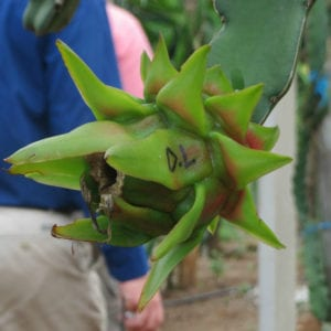 IPPS-natural-area-cut-flowers-aloe