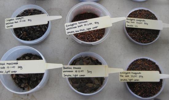 Seed-Seedbank-615-x-326