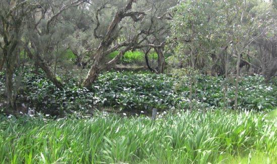 marella-road-wetland-weed-615-x-326