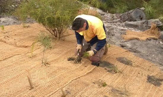 revegetation-planting-coir-mesh-kemerton-bunbury-615-x-326