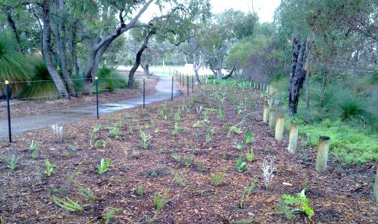 revegetation-richard-guelfi-615-x-326