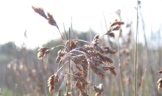 seed-lyginia-615-x-326