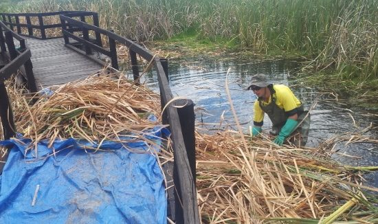 typha-removal-615-x-3261