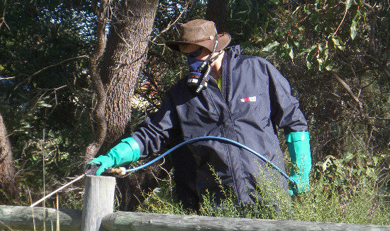 weed-control-bushland-2016-3-615-x-326
