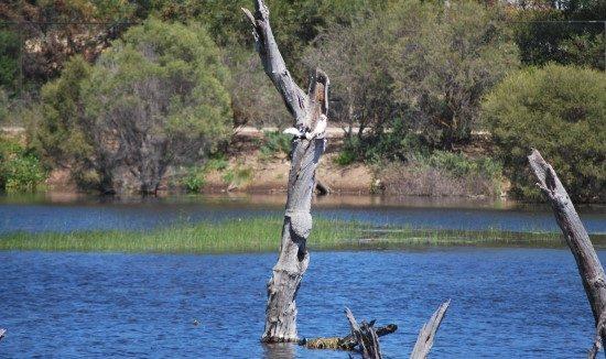 wetland-management-lake-615-x-326
