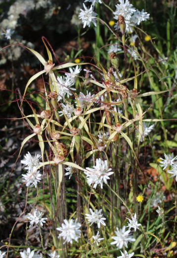 flora survey 2